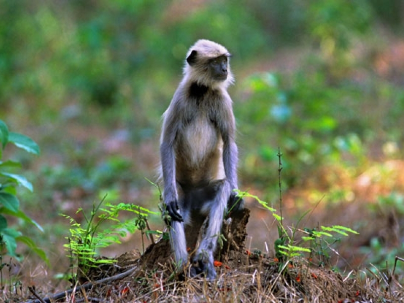 Eco & Wildlife Tours in india