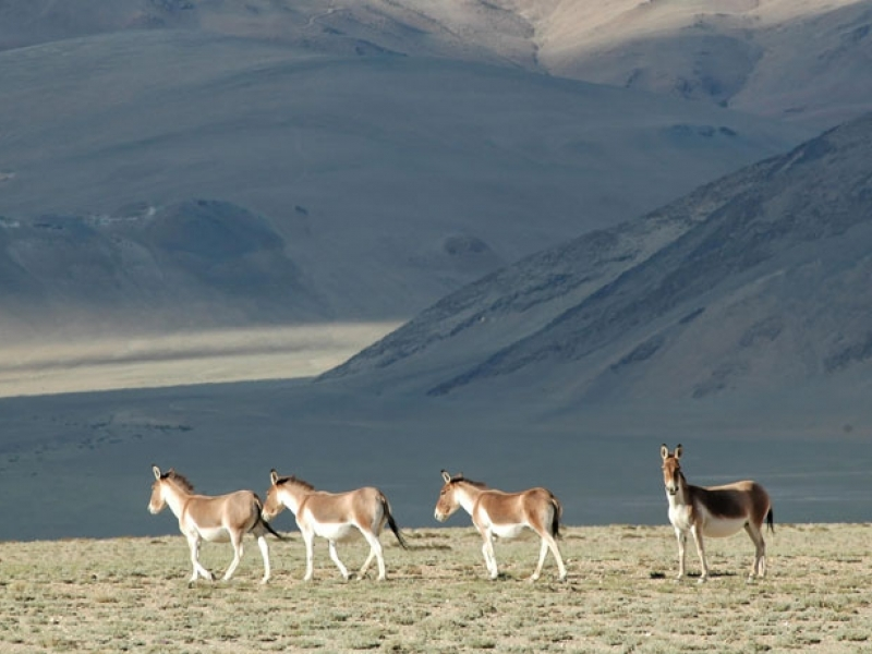 wildlife-activities-in-tibet-package