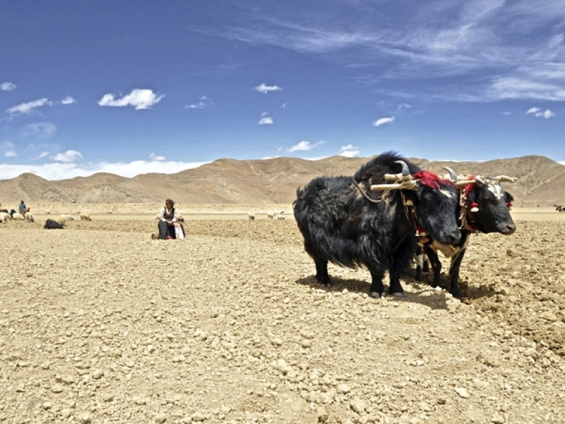 tibet-cultural-tour-package